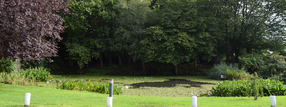 The Village Pond - it has ducks too.....